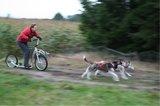 Treklijn voor 2 honden_
