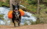 Ruffwear Approach Pack_