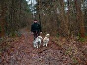 Starter kit 'Handsfree wandelen met 2 honden'