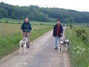 Starter kit 'Handsfree wandelen met 1 hond'