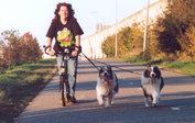 Starter kit - Neewa steppen met je hond
