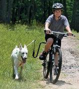 Springer - veilig fietsen met de hond